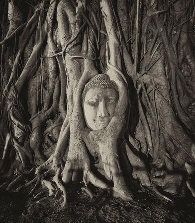 budha: Travel to Thailand, Ayutthaya  Old tree Buddha stone sculpture  Wisdom and pray Stock Photo