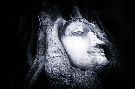 Travel to Thailand, Ayutthaya  Old tree Buddha stone sculpture  Wisdom and pray photo