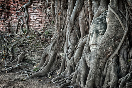 Travel to Thailand, Ayutthaya. Old tree Buddha stone sculpture. Wisdom and pray photo