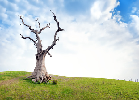 Old dead tree on green meadow at sunny summer day with clouds and blue sky. Dramatic and symbolic conceptual background about life and death