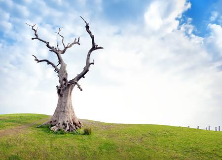 Vieil arbre mort sur le pré vert au jour d'été ensoleillé avec des nuages ??et de ciel bleu. Fond conceptuel dramatique et symbolique de la vie et la mort Banque d'images - 31202910