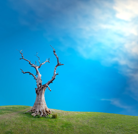 Sun light through clouds and big old dead tree mystical creative concept background photo