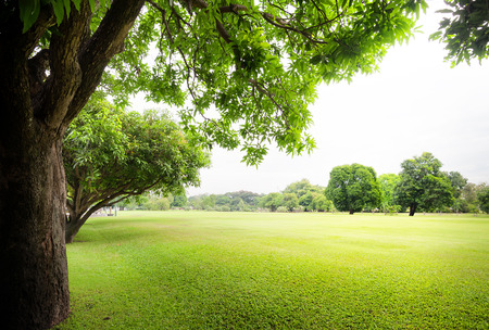 Green park with fresh grass and trees at summer season Banque d'images