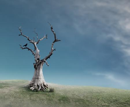 arboles secos: Árbol muerto viejo