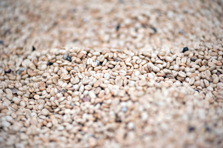 unroasted: Unroasted raw coffee beans grains background with shallow depth of field