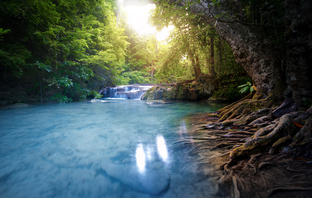 Clean water river stream flows through lush forest. Beautiful sunlight peaceful environment