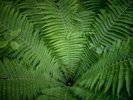Top view of green fern plant in tropical forest Stok Fotoğraf