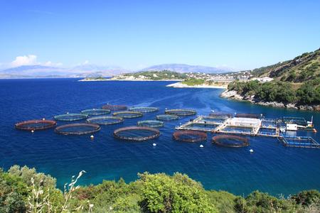 fish breeding: Farm for breeding fish in cages in the open sea Stock Photo