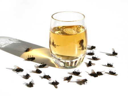 drunkenness: Flies inhaled vapors of alcohol and now theyre dead
