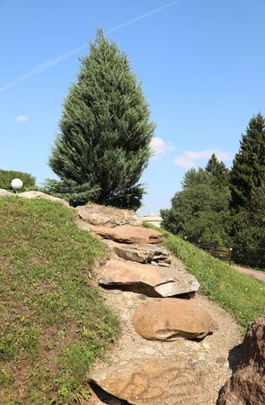 Fir growing on a hill in a park. Russia