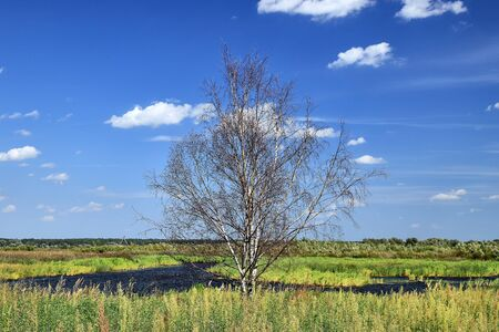 Dry birch on a background of blue sky on the river