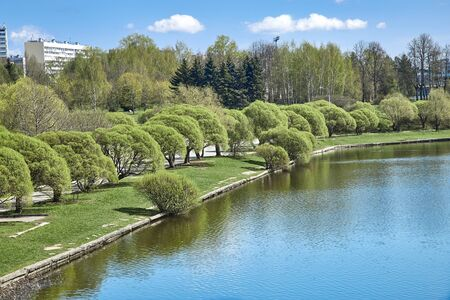 Curly spring willows on a city pond. Spring in the city Foto de archivo