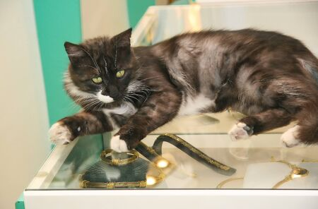 Cat guards the counter with gold. Big lover of gold