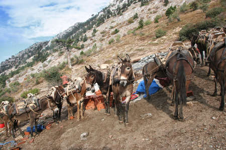 Donkeys are the main transport of Mount Athos. Greece They are used both for lifting loads and people on Mount Athos.