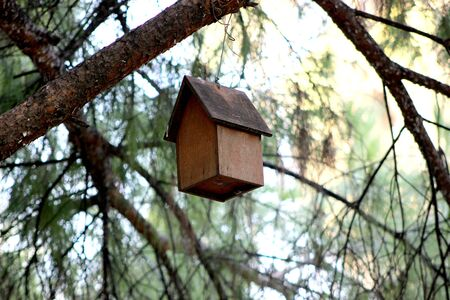 made: Wooden bird house made of green tree Stock Photo