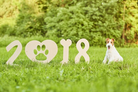 greet card: Adorable happy fox terrier dog at the park 2018 new year greetin