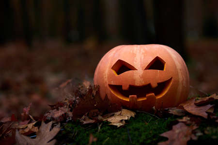 Shot of Halloween pumpkin jack head