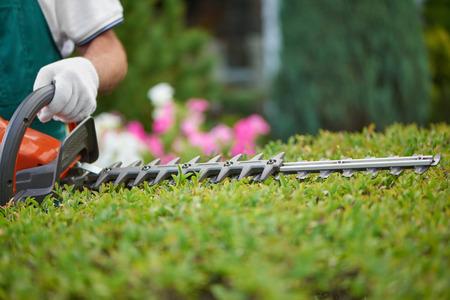 Professioneller männlicher Gärtner, der einen speziellen Overall mit Schutzhandschuh trägt und mit professionellen Gartengeräten im Hinterhof arbeitet. Heckenschere schneidet Büsche zum idealen Zaun. Gartenkonzept.