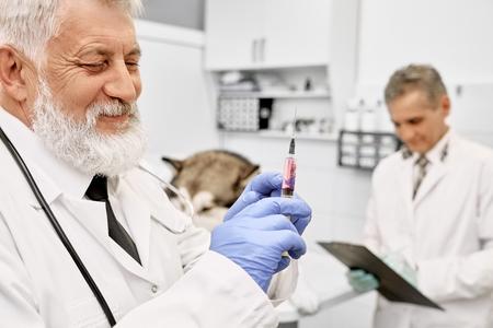 Profesjonalny lekarz weterynarii ubrany w niebieskie rękawiczki i białą suknię medyczną. Brodaty weterynarz trzyma, patrząc na igłę do wstrzykiwania psa. Asystent stojący z teczką w pobliżu psa.