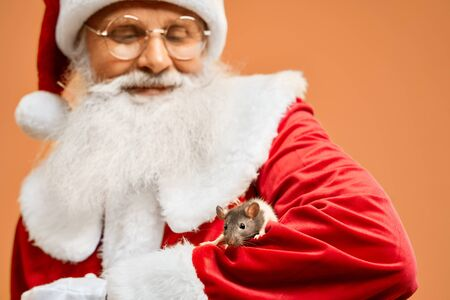 Happy senior Santa Claus with real beard looking through eyeglasses at small grey rat that creeping on his hands, isolated on orange background. Astrological horoscope and zodiac concept. Stock Photo