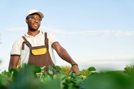 Happy afro american man in special overall, protective glasses and summer hat relaxing during gardening work. Professional gardener in uniform trimming overgrown bushes.