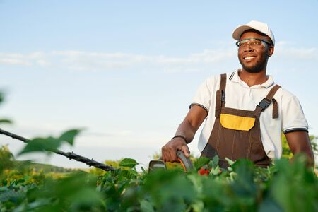 Smiling african male gardener in protective glasses cutting green bushes with shears with background of blue sky. Handsome man in overall working in garden with plants