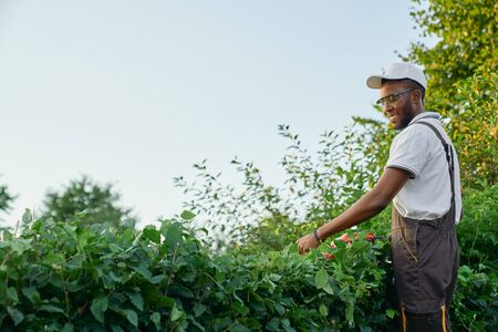 Side view of cheerful afro man in grey uniform and protective glasses cutting hedge with electronic trimmer during gardening. Male gardener professionally pruning overgrown leaves