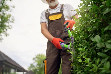 Crop of incognito senior man with grey beard wearing uniform and summer hat cutting overgrown bushes with big scissors. Eldery worker taking care of plants in garden. Concept of gardening. 写真素材