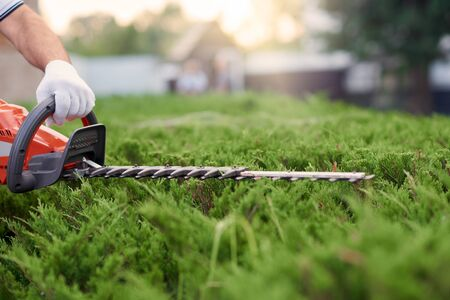 Unrecognizable male gardener cutting hedge. Close up of worker in gloves tidily shaping top of big green bushes using red and black electric trimming machine. Concept of work, gardening.