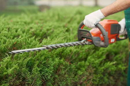Unrecognizable male gardener cutting hedge. Close up of worker in gloves tidily shaping top of big green bushes using red and black electric trimming machine. Concept of work, gardening. Standard-Bild