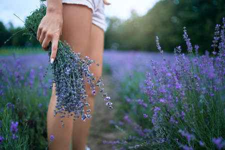 Side view of unrecognizable young woman wearing white shorts carrying aromatic bouquet of beautiful purple flowers. Crop of girl posing in lavender field, long rows. Concept of nature beauty.