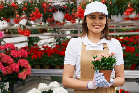 Close up portrait of smiling handsome young brunette woman in white cap and t-shirt holding small cute pot with pink flower. Concept of care for flowers in modern greenhouse. 版權商用圖片