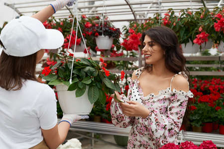 Side view of young woman florist helping for young attractive young woman choosing pot with beautiful red flowers in large modern greenhouse. Concept of bright beautiful flowers in hothouse.