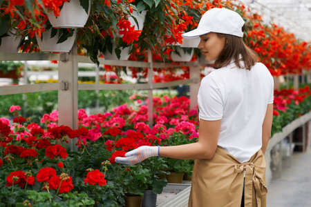 Side view of beautiful young woman in white gloves and special uniform working with flowers pots in large modern greenhouse. Concept of process care for plants. 版權商用圖片