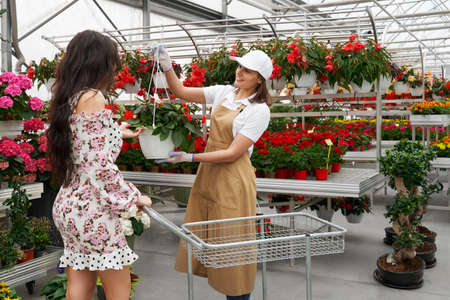 Side view of florist woman helping choose beautiful pot with red flowers for attractive young woman in cute dress. Concept of process choosing plants in modern greenhouse. 版權商用圖片