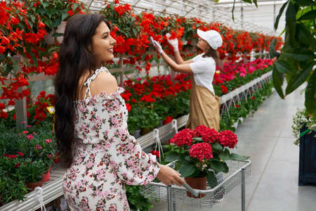 Side view of young brunette woman and young worker choosing beautiful red and different colors in modern large greenhouse. Concept of walking in greenhouse and buy flowers.