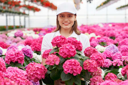 Portrait of charming florist in white cap smiling and looking at camera while posing among colorful blooming hydrangea. Cultivation of house plants at greenhouse. 版權商用圖片