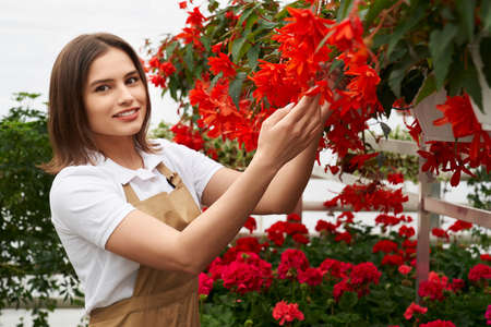 Pretty young woman in apron checking controlling growth of red flowers at greenhouse. Female gardener cultivating houseplants at work. 版權商用圖片