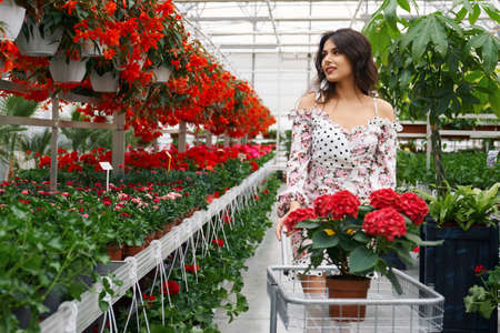 Adorable lady in romantic summer dress walking at large greenhouse with shopping trolley and choosing plants. Female client with curly dark hair buying flowers at orangery. 版權商用圖片