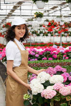 Charming female florist in white cap and beige apron examining quality of hydrangea at greenhouse. Young brunette controlling growth of plants at work.