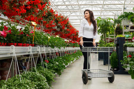 Full length portrait of attractive woman walking at large greenhouse with shopping trolley and choosing plants for house. Concept of people and flowers.