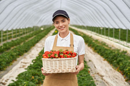 Charming caucasian woman holding white basket with fresh strawberries while posing at greenhouse. Pleasant female farmer in cap and apron smiling and looking at camera.