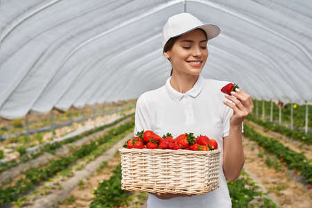 Happy female field worker standing at greenhouse with wicker basket full of fresh ripe strawberries. Cultivation of seasonal berries. Harvesting concept.