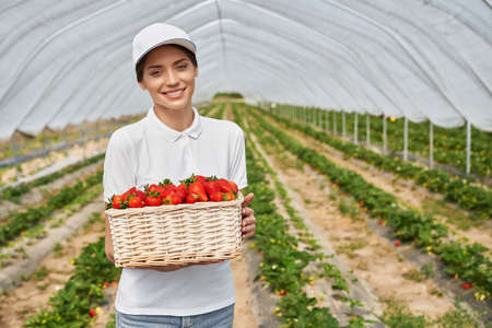 Positive young woman holding wicker basket with ripe strawberries while standing at greenhouse. Female farmer in white cap smiling and looking at camera. 版權商用圖片