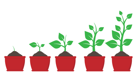 Growth of plant in pot. Vector illustration. Eps 10