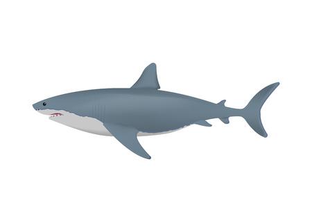 Realistic shark isolated on white background. Vector illustration. Eps 10.
