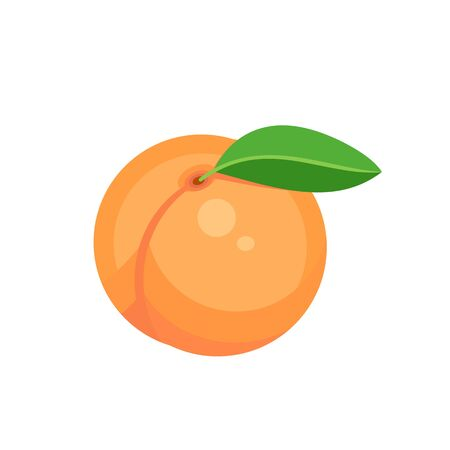 peach fruit isolated on white background. Vector illustration. Ilustração