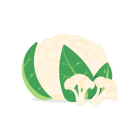 cauliflower isolated on white background. Vector illustration. Eps 10. Stock Illustratie