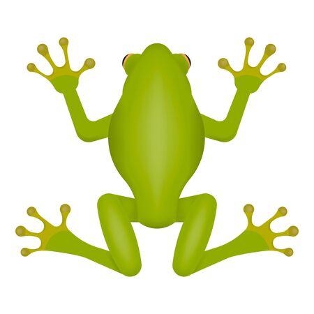 Green frog isolated on white background. Illusztráció