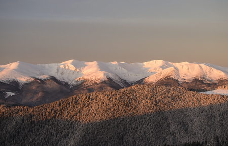 Winter morning in the mountains with a view of pine-textured slopes and a distant snow-covered ridge on the background